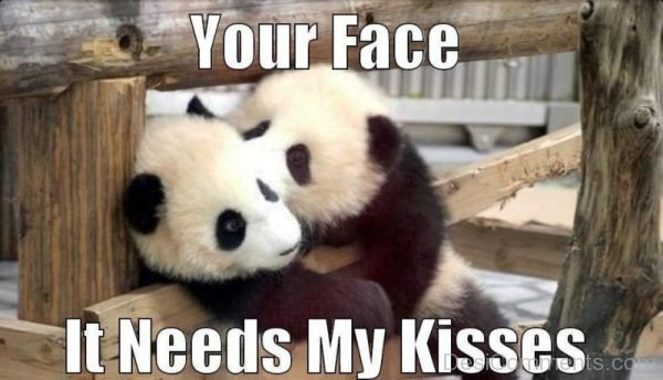 Your Face It Needs My Kisses