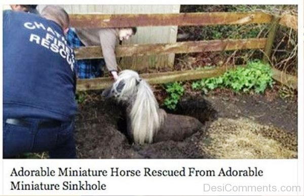 Adorable Miniature Horse Rescued