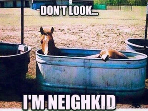 Dont Look Im Neighkid
