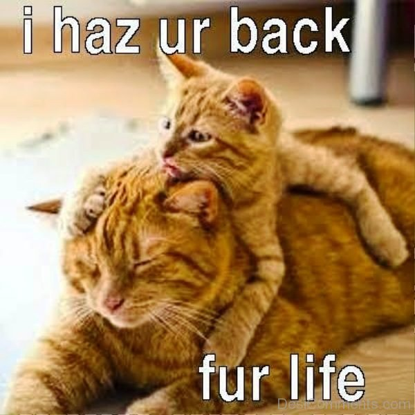 I Has Your Back For Life