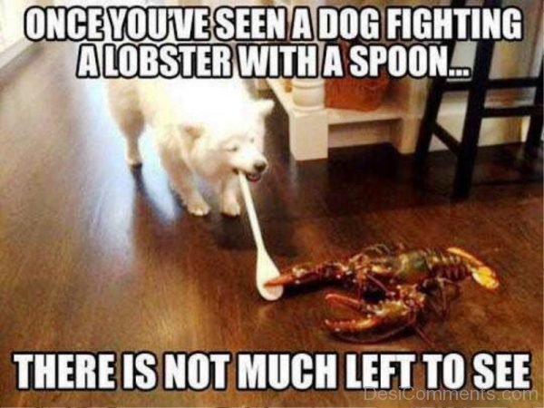 Once You ve Seen A Dog Fighting