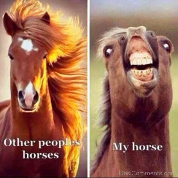 Other People Horses Vs My Horse
