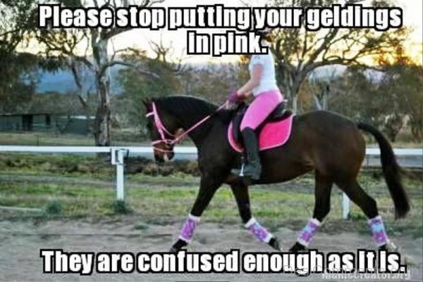 Please Stop Putting Your Geldings In Pink