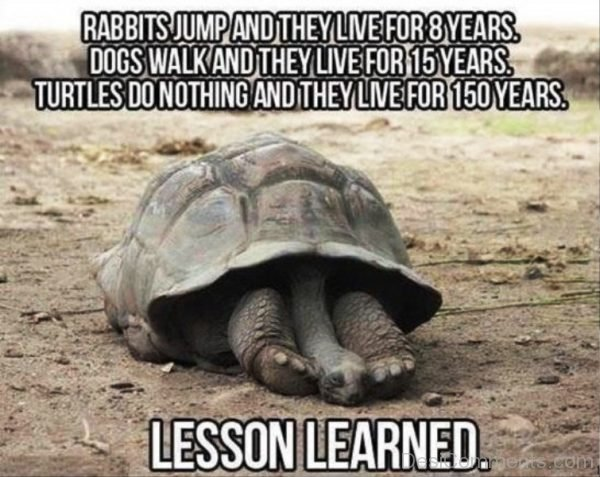Rabbit Jump And They Live For 8 Years