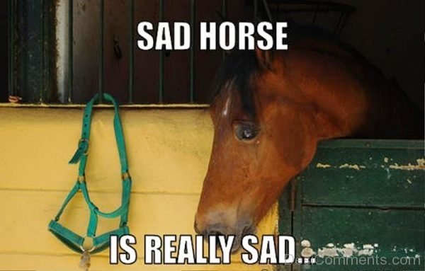 Sad Horse Is Really Sad