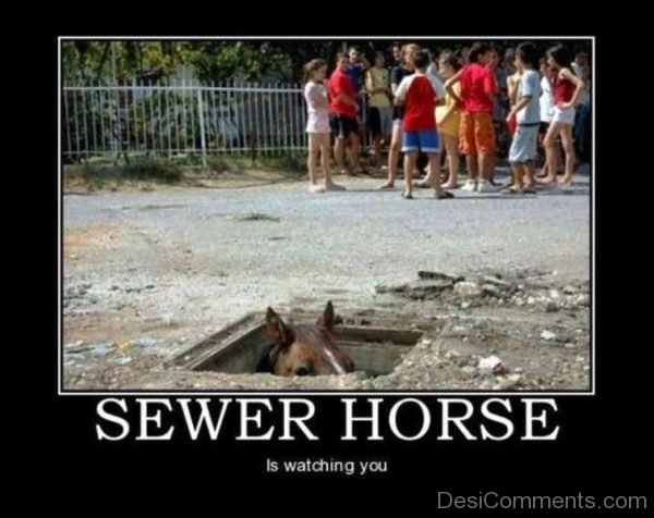 Sewer Horse Is Watching You