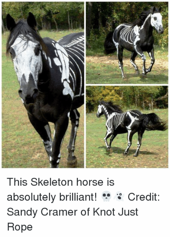 This Skeleton Horse Is Absolutely Brilliant