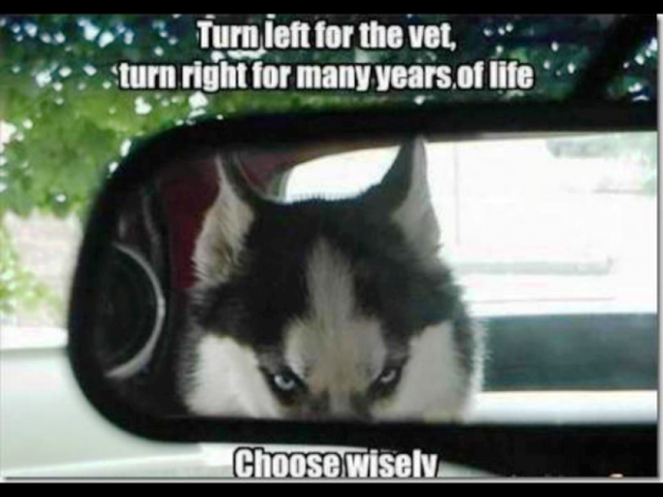 Turn Left For The Vet