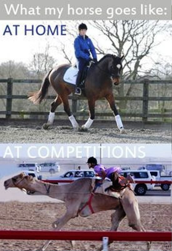 What My Horse Goes Like