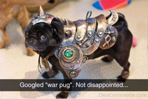 Googled War Pug Not Disappointed