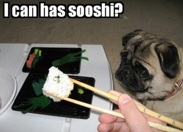 I Can Has Sooshi