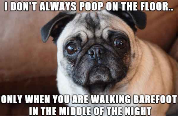 I Dont Always Poop On The Floor