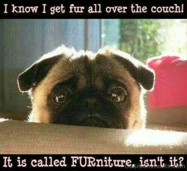 I Know I Get For All Over The Couch