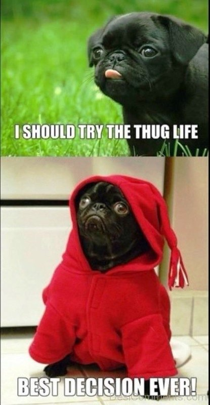 I Should Try The Thug Life