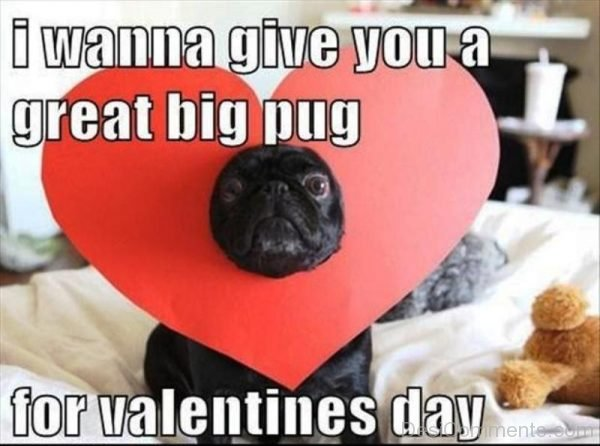 I Wanna Give You A Great Big Pug