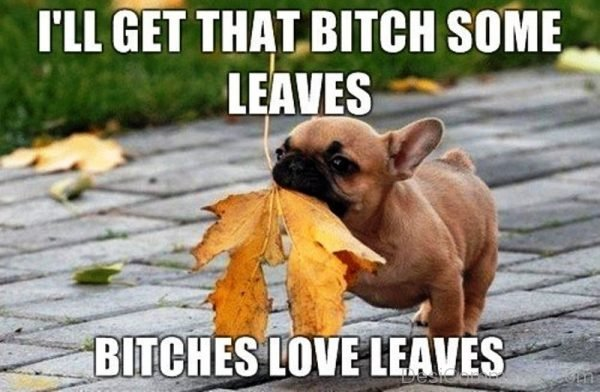 Ill Get That Bitch Some Leaves