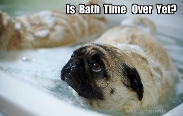 Is Bath Time Over Yet