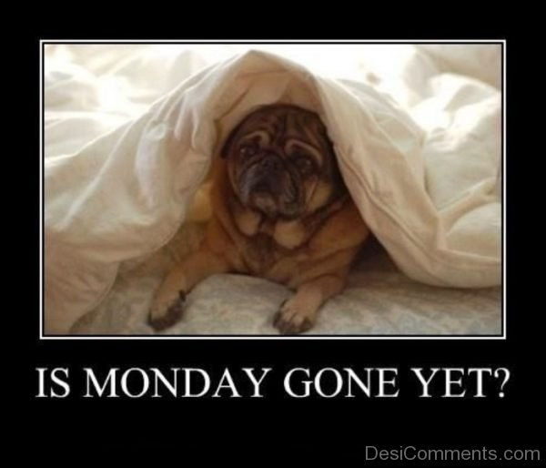 Is Monday Gone Yet