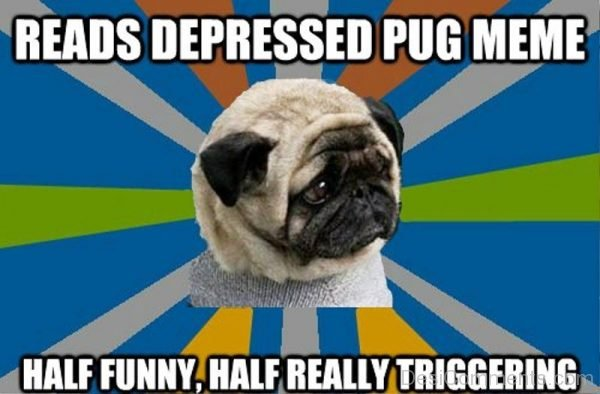 Reads Depressed Pug Meme