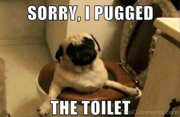 Sorry I Pugged The Toilet