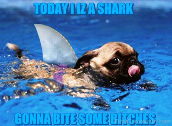 Today I Is A Shark