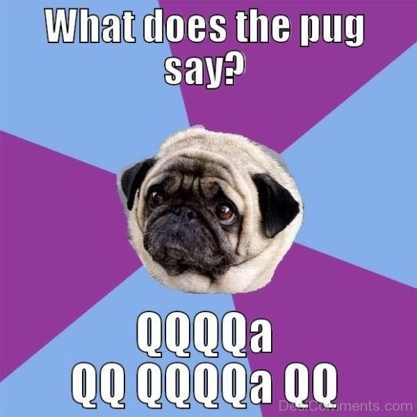 What Does The Pug Say