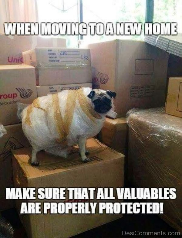 When Moving To A New Home