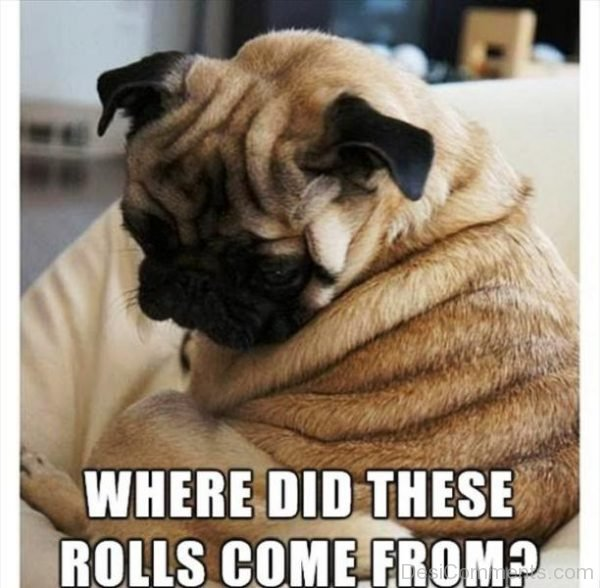 Where Did These Rolls Come From