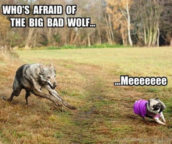 Whos Afraid Of The Big Bad Wolf