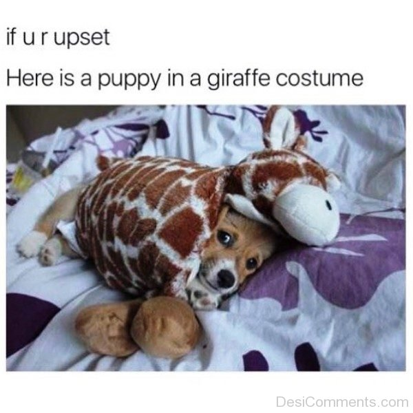 If You Are Upset