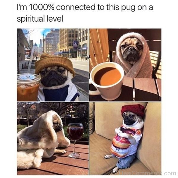 Im 1000 Percent Connected To This Pug