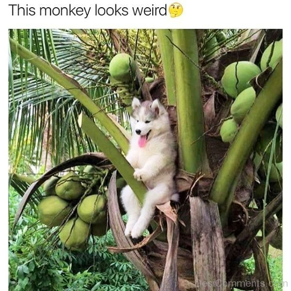 This Monkey Looks Weird