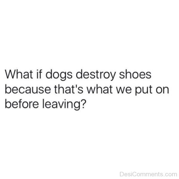 What If Dogs Destroy Shoes