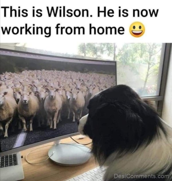 This Is Wilson