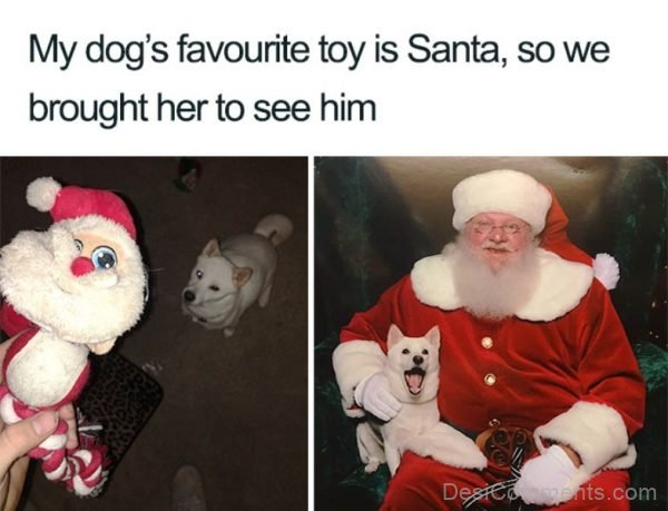 My Dog's Favourite Toy Is Santa