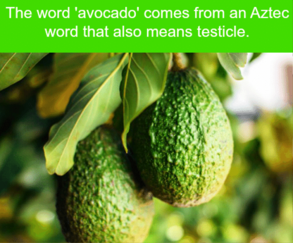 The Word Avocado