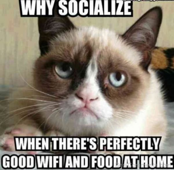 Why Socialize