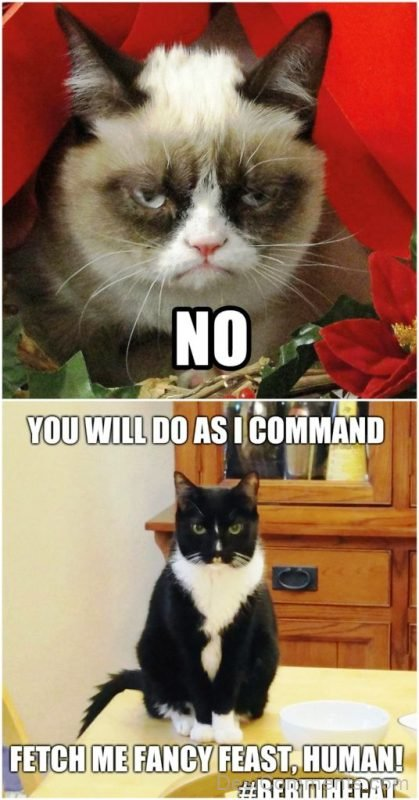 You Will Do As I Command
