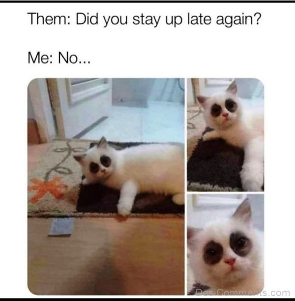 Did You Stay Up