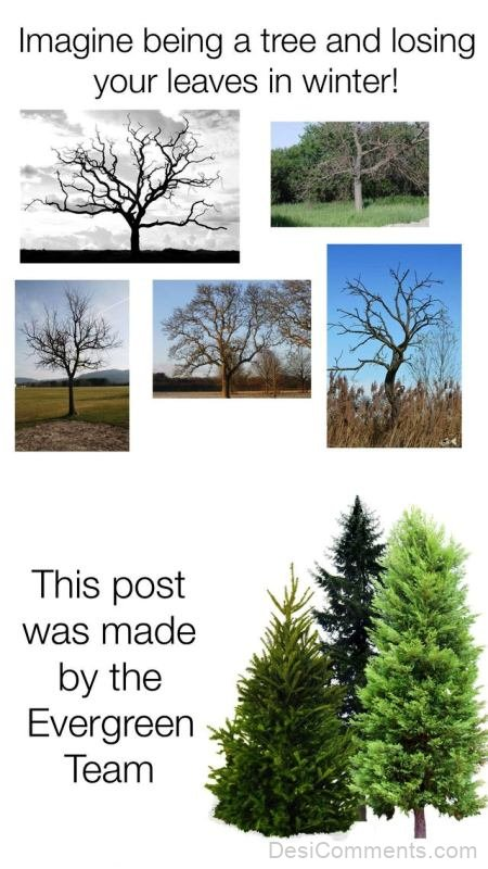 Imagine Being A Tree