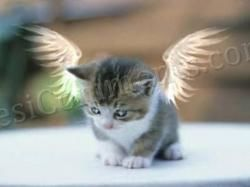Picture: cat Angel