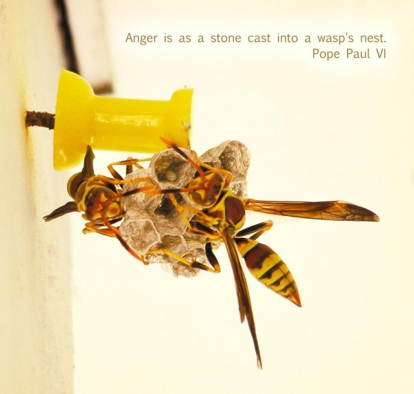 Anger Is As A Stone Cast Into A Wasp's Nest