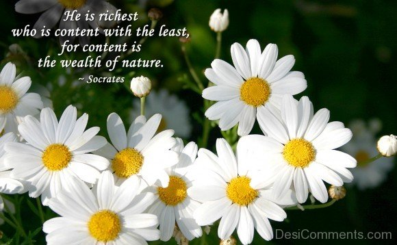 He Is Richest Who Is Content With The Least For Content Is The Wealth Of Nature