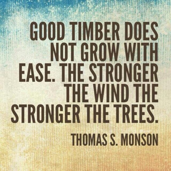 The wind the stronger the trees