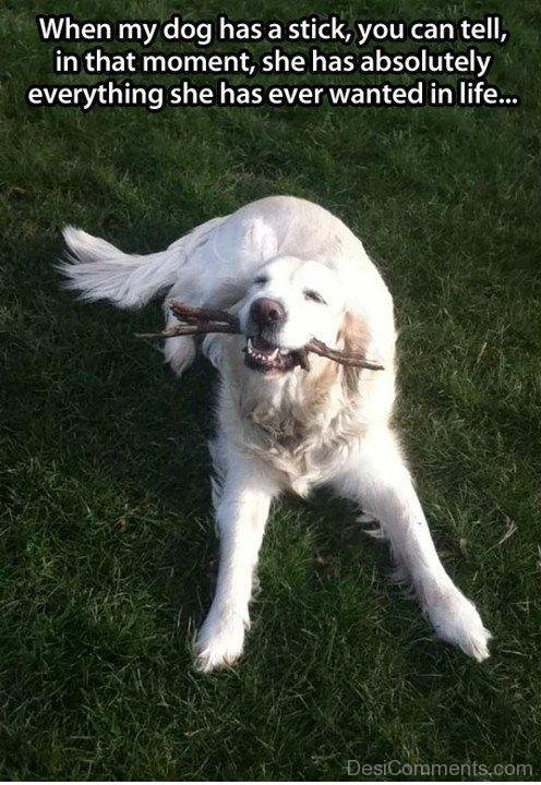 When My Dog Has A Stick You Can Tell In That Moment, She Has Absolutely Everyrthing She Has Ever Wanted In Life