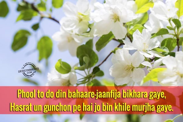 Picture: Phool To Do Din Bahaare-Jaanfija