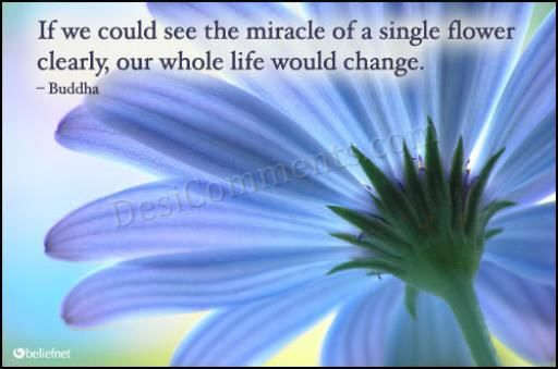 A single flower can change ur life
