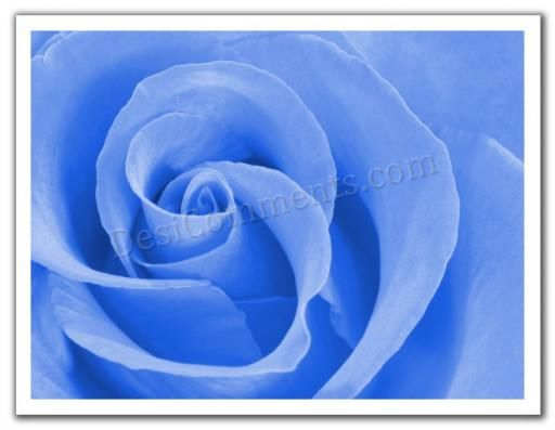 Picture: Blue Rose