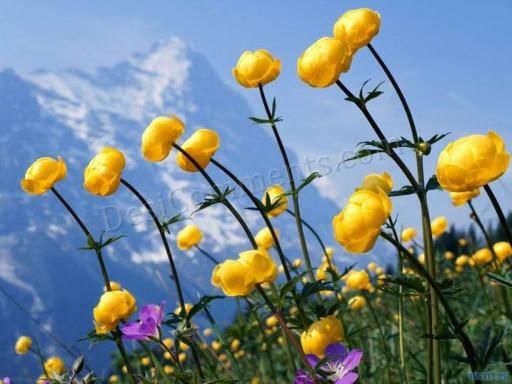 Picture: Sun Flowers