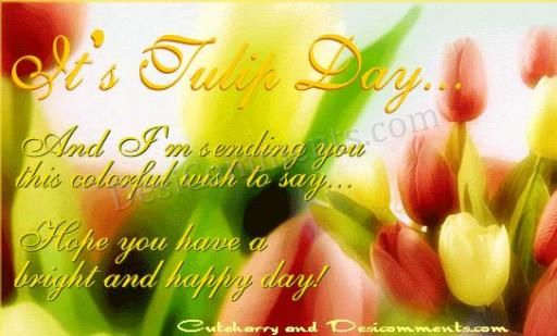 13th may, tulip day